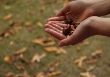 手のひらに秋